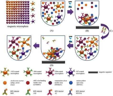 detection for plant pathogens using multiplex technology