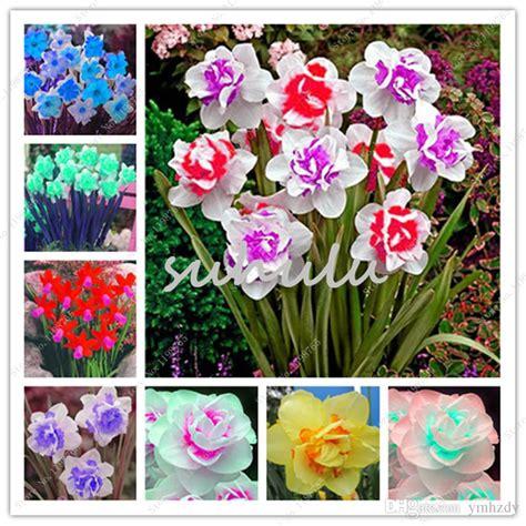fiori con bulbo mughetto narciso fiori da bulbo html