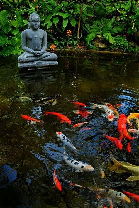 imagenes de zen koi 41 best images about bassin de jardin on pinterest