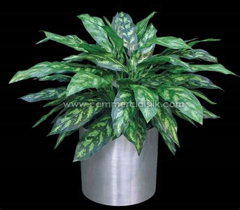 chinese evergreens artificial chinese evergreen maria plant commercial silk
