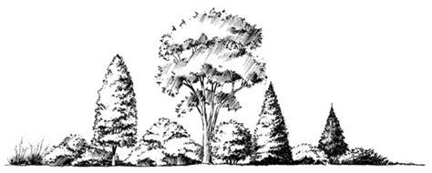 landscape plants  georgia uga cooperative extension