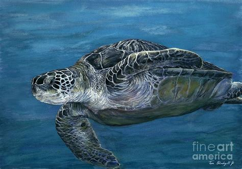 green sea turtle painting by tom blodgett jr