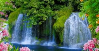 beautiful waterfalls with flowers beautiful waterfalls with flowers google search scenic