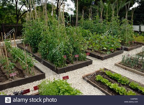 Vegetable Garden Potager Or Kitchen Garden With Tomato What To Plant Where In A Vegetable Garden