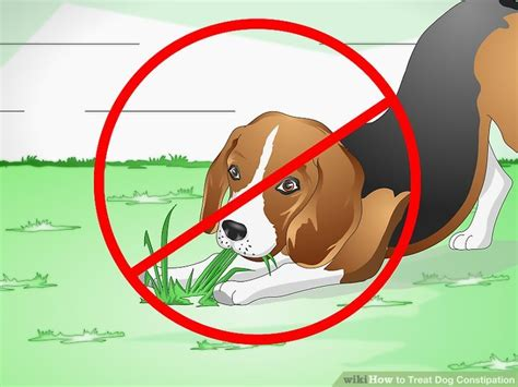 how to make a puppy when constipated how to treat constipation 9 steps with pictures wikihow