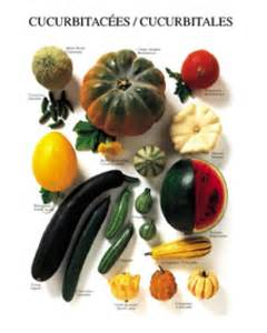Traditional English Home Decor vegetables cucurbitaceae art prints buy posters