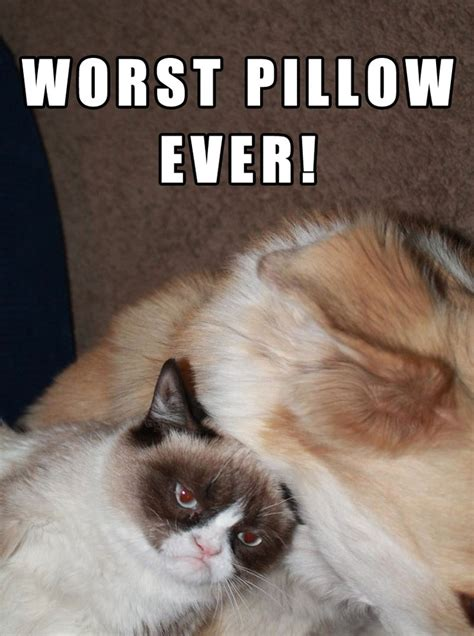 Grumpy Cat Sleep Meme - grumpy s trying to sleep pets pinterest