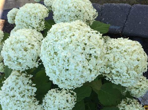 easy  grow perennials  zone  edmonton ab