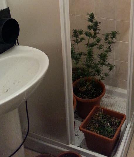 di nella doccia nascondeva una serra di marijuana nella doccia della taverna