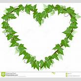 Ivy Leaf Heart Royalty Free Stock Photos - Image: 3624718