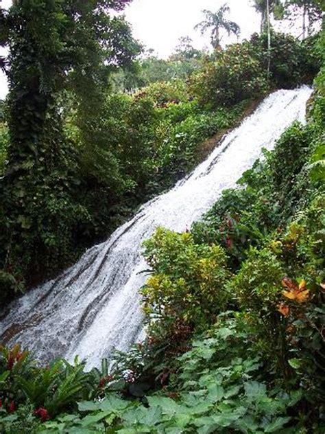 Shaw Botanical Gardens Gardens To Visit Shaw Park Botanical Gardens Jamaica