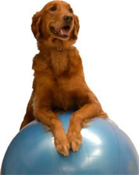 physical therapy for dogs 17 best images about physical therapy humams amimals on pink blue