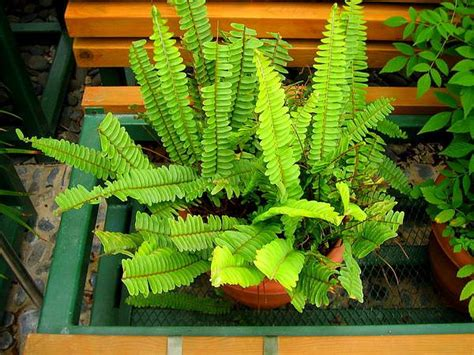 plants that do well indoors best indoor plants that grow without sunlight