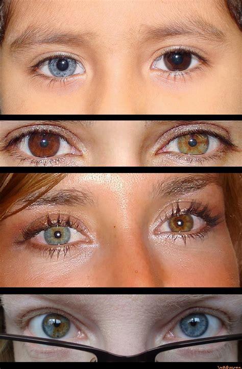 occhi di due colori diversi valigetta trucco occhi di 2 colori diversi