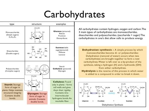 carbohydrates 4 types biology keynote