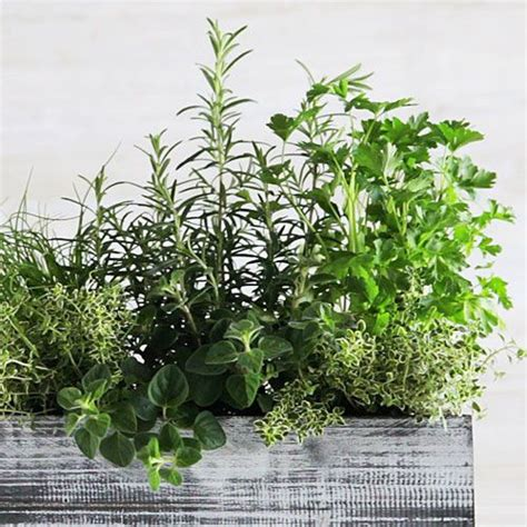 Windowsill Herb Garden Containers by How To Plant A Windowsill Herb Garden Herbs Gardens And