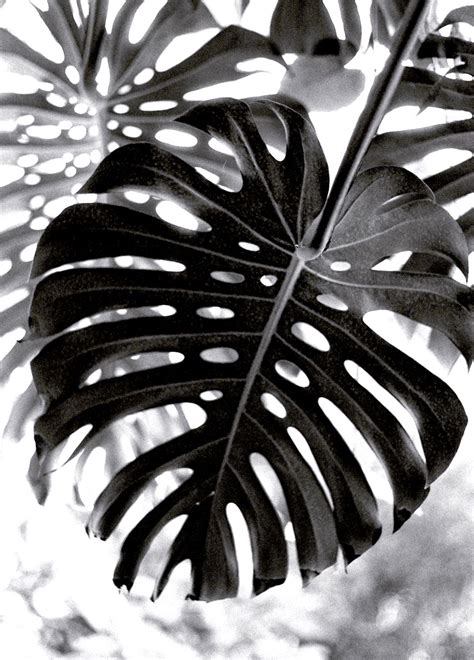 photography pattern black and white black white patternful pinterest monstera