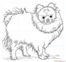 how to draw a pomeranian dog step by step drawing tutorials