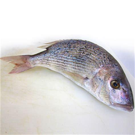 come cucinare un dentice le raffinatezze dentice fresco pesce