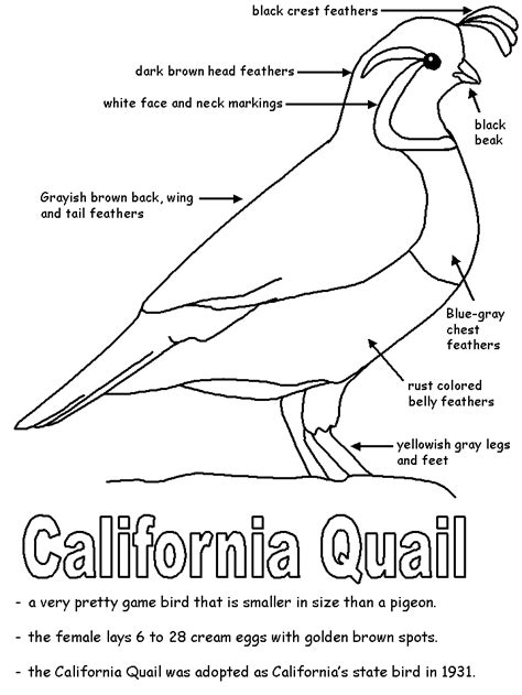 coloring page map of california california quail with labels
