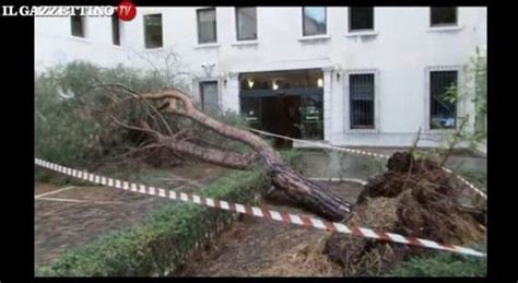 sede regione veneto venezia gigantesco pino marittimo cade sulla sede della regione veneto
