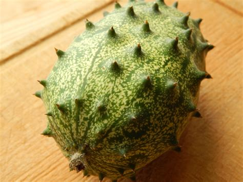 fruit with spikes how to grow a kiwano or horned melon sow and so