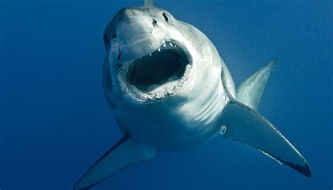 beautiful shark wallpapers   fun