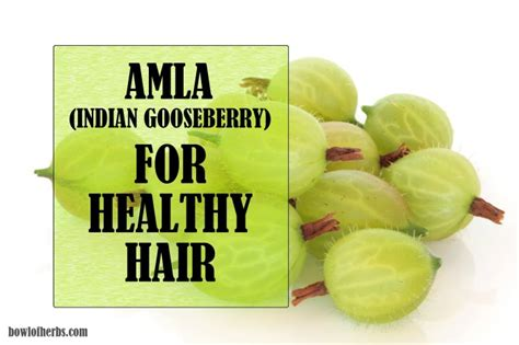 Amla Gooseberry For Hair by Amla Indian Gooseberry For Healthy Hair