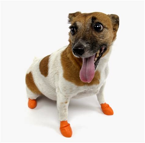 dogs in boots can dogs wear shoes pets world