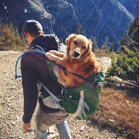 best city dogs our in a backpack at lethbridge daily photo dose