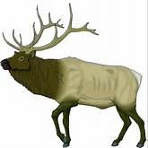Elk-Drawings-Clip-Art Elk Drawings Clip Art http://www.rangerdj.com ...