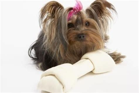 how to potty a yorkie to go outside what is the best way to toilet your puppy fast how to potty teacup puppy