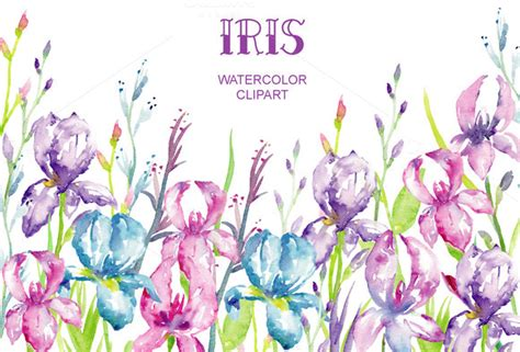 Ires Pink Flowers Top top 94 iris flower clipart best clipart