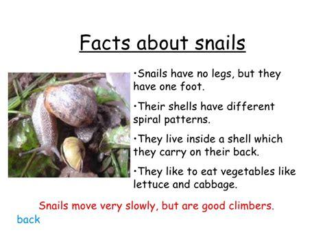 Types Of Garden Snails - minibeasts