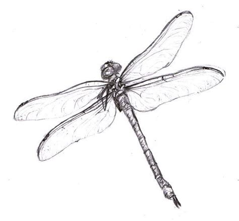 outline bugs on pinterest dragonfly tattoo design