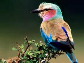 bird colors birds wallpapers inbox