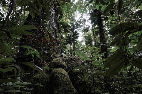 la selva tropical pin la selva tropical on pinterest