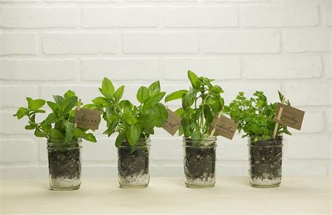 herb gardens to practice your green thumb with diy to make makerskit diy mason jar garden kit for your green thumb