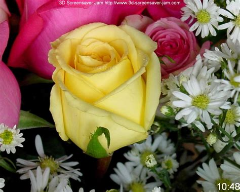 roses pictures top  roses picture