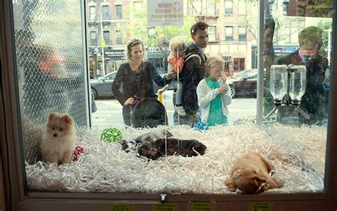 jersey passes  law  requires pet stores  sell