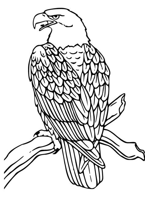 coloring page of eagle flying cartoon eagle flying cliparts co