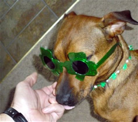 are dogs really colorblind dogs are color blind 1996 instabittorrent