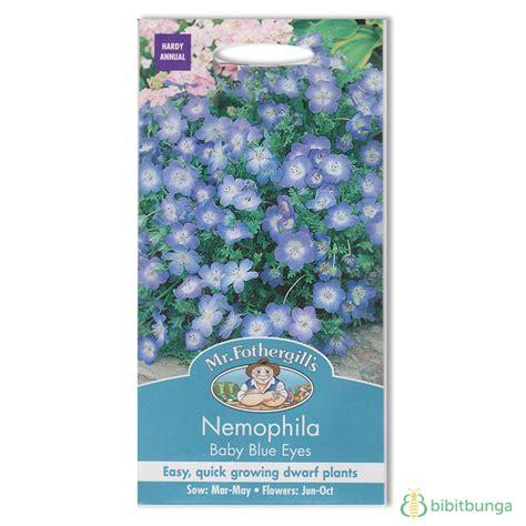 Benih Bunga Mr Fothergills Import Cornflower Blue benih nemophila baby blue 500 biji mr fothergills