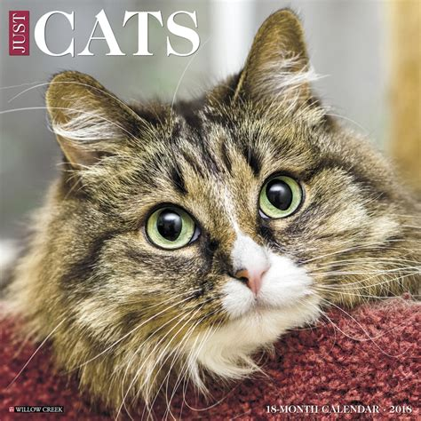 Cat Calendar Just Cats 2018 Wall Calendar 9781682344422 Calendars
