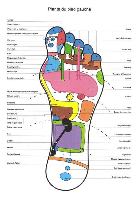 Plan 65 by Visualisation Des Zones R 233 Flexes Du Pied