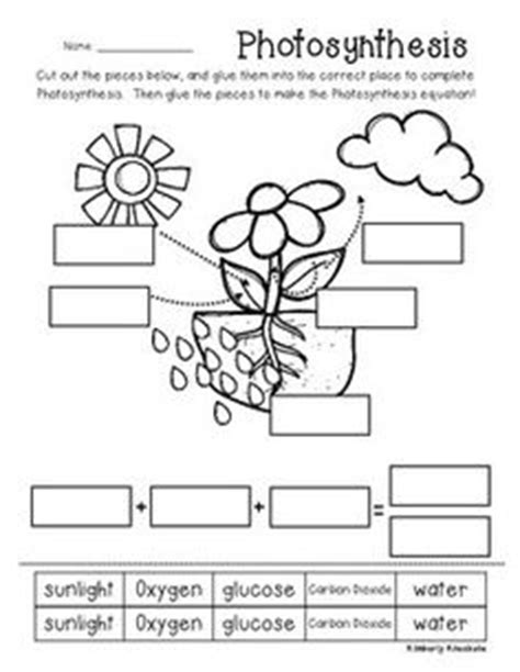 free technology for teachers hammocks plants and bedrooms photosynthesis coloring page photosynthesis worksheets