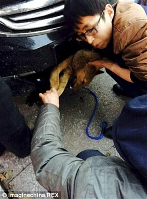 dogs getting stuck gets stuck in car s grill