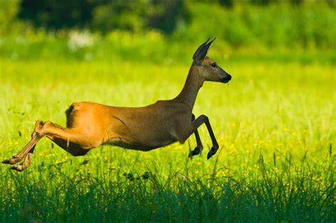 Imagenes Animales Y Naturaleza | banco de im 225 genes para ver disfrutar y compartir 12