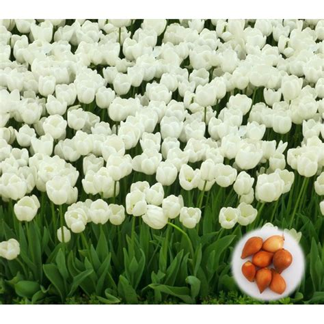 online buy wholesale tulip chair from china tulip chair online buy wholesale white tulip bulbs from china white