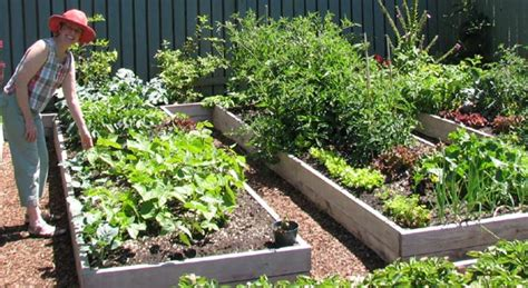 Eartheasy Blog » 5 Secrets to a ?No work? Garden